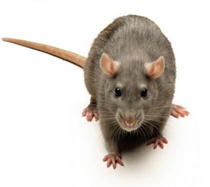 Thuốc diệt chuột  các loại  ,hàng nhập khẩu 100% - 20