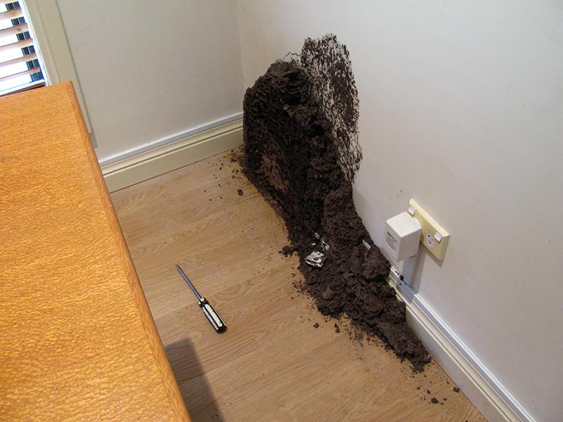 Tổ mối đất trong nhà