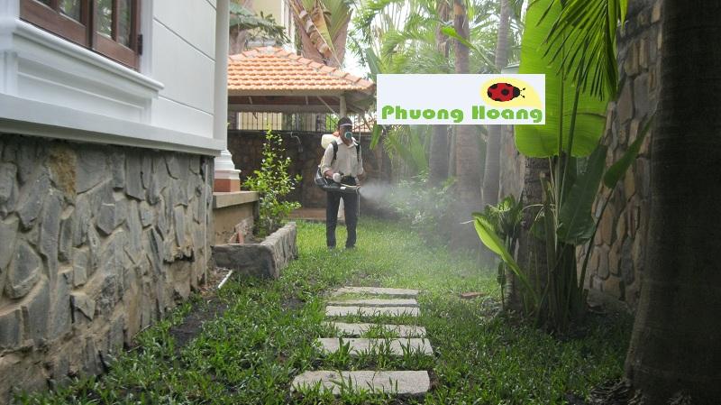 diệt muỗi tại nhà