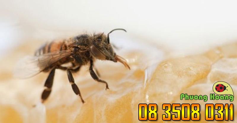 Ong mật- Mức độ 2 (đau đớn có thể kéo dài tới 10 phút).