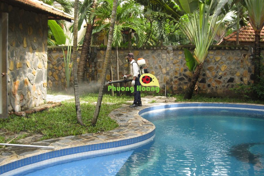 phượng hoàng diệt muỗi tại nhà
